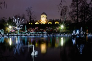 cincinnati-zoo-festival-of-lights-opening-lake