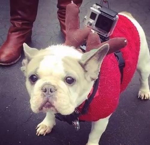 Sofie at the Bulldog parade
