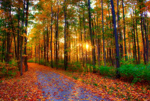 fall-leaves-apps.jpeg