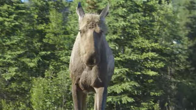Watch video Sounds of Denali