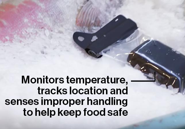 Food sensor next to fish