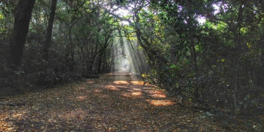 Chennai forest