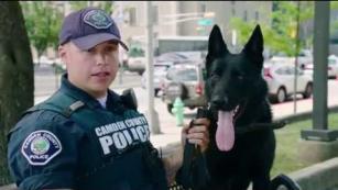 Verizon | Fios the dog