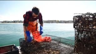 Making food safer, one oyster at a time: Ag Tech in Action Ward Aquafarm