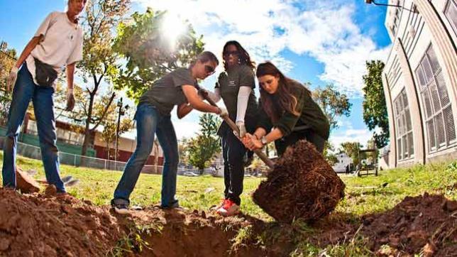 Planting trees in Newark NJ
