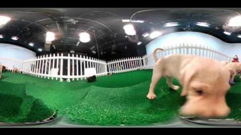 360 Puppy Cam by Verizon