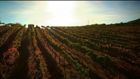 If Grapes Could Talk   AgTech in Action: Hahn Family Wines