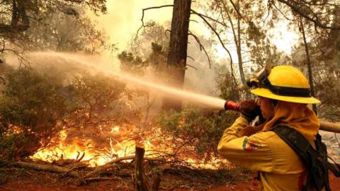 Fighting a forest fire