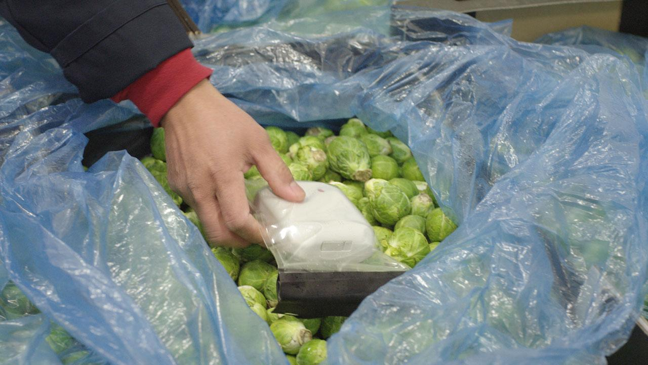 Brussel sprouts with food safety monitor