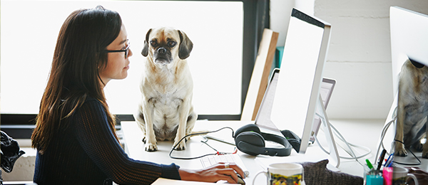 Woman working at her desk with a dog by her side.